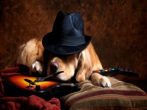 Labrador Retriever con sombrero tumbado sobre una guitarra electrónica