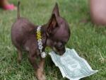 Un perrito mirando un billete de un dólar