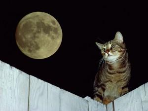 Un gato acompañando a la luna llena
