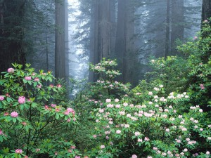 Flores en un bosque