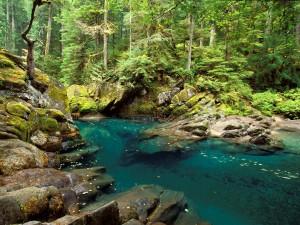 Río Ohanapecosh (Parque nacional del Monte Rainier, Washington)