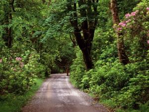Camino verde entre árboles y plantas