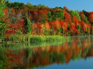 Los colores del otoño reflejados en un lago