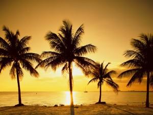 Sol iluminando las palmeras