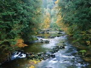 Piedras en un río