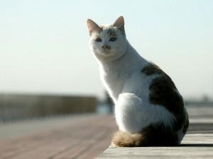 Un gato sentado al sol