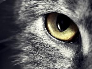 Ojo de un gato