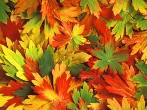 Bonitas hojas otoñales