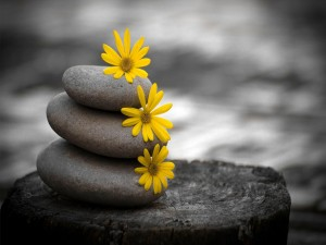 Tres flores amarillas sobre tres piedras