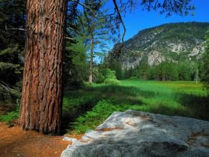 Roca junto a un árbol