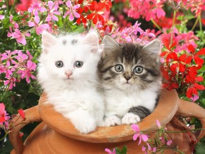 Dos gatitos dentro de una vasija