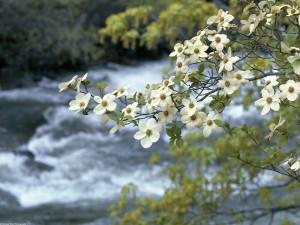 Flores junto al río