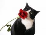 Gato oliendo una rosa