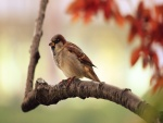 Gorrión descansando en una rama