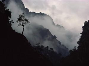 Niebla cubriendo las montañas