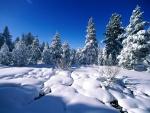 Paisaje cubierto de blanca nieve