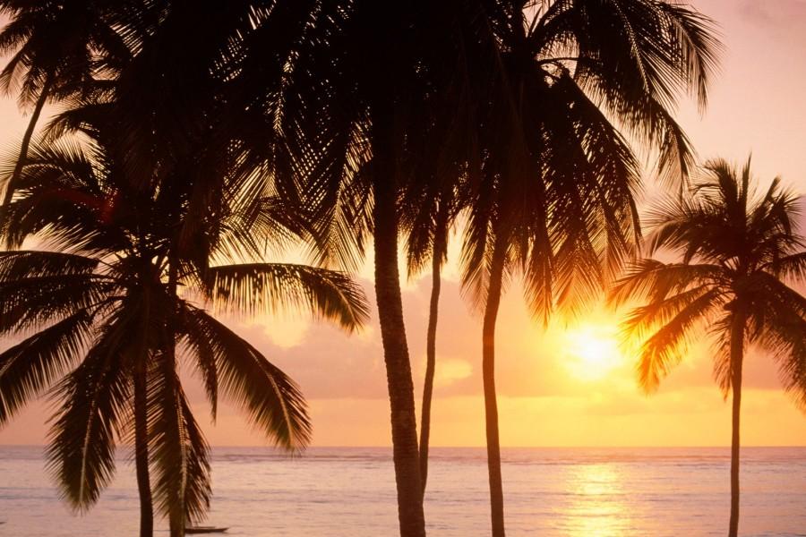 Sol sobre el mar y las palmeras