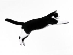 Un gato saltando