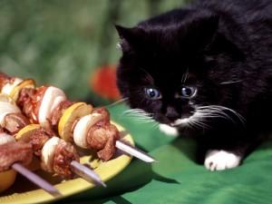 Gato acercándose a unas brochetas