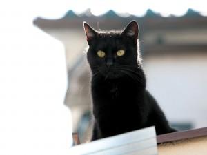 Un gato negro en el tejado