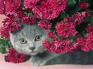 Gato escondido entre unas flores