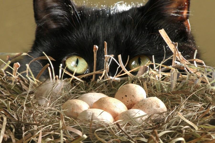 Gato junto a un nido