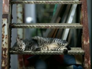 Gato dormido en una escalera