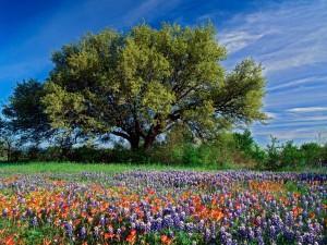 Coloridas flores junto a un árbol