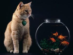 Gato junto a una pecera