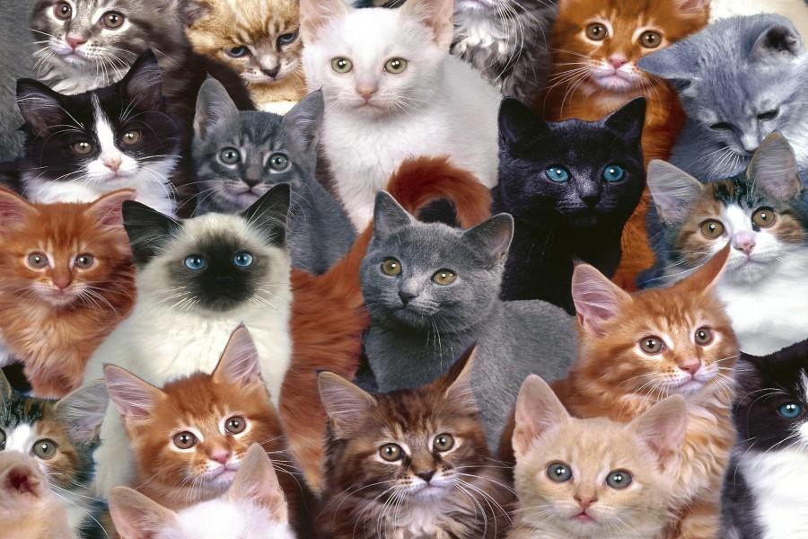 Gatos de varios colores