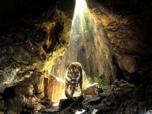 Tigre en una cueva