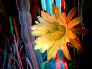 Flor de cactus de color amarillo