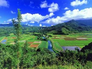 Campos de cultivo en Hawái