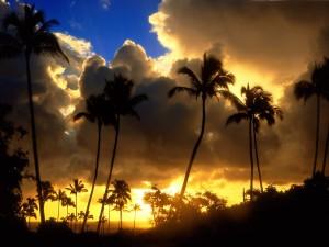 Sol entre nubes iluminando las palmeras