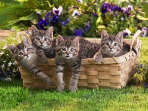 Gatitos dentro de una cesta en el jardín