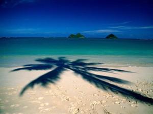 La sombra de una palmera sobre la playa