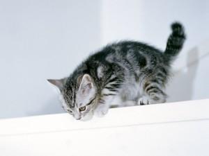 Gatito gris en una estantería