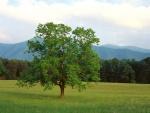 Árbol verde en un prado