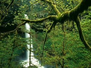 Cascada en un hermoso bosque