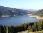 Pinos a orillas del lago