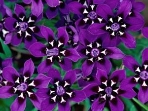 Hermosas flores de color púrpura y blanco