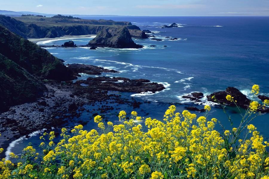 Flores junto a la costa