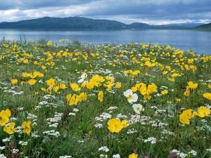 Primavera a orillas del lago