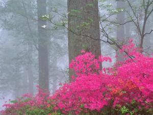Flores rosas en el bosque