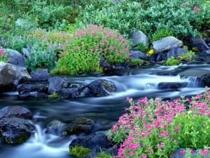 Flores y plantas a orillas del río