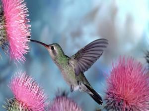 Colibrí alimentándose del néctar de una flor