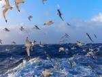 Una bandada de gaviotas sobre el mar