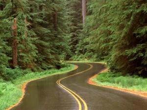 Carretera mojada en un bosque