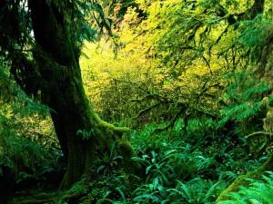 Árbol y helechos en el bosque