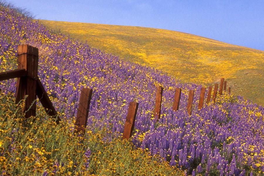 Flores lilas y amarillas en el campo
